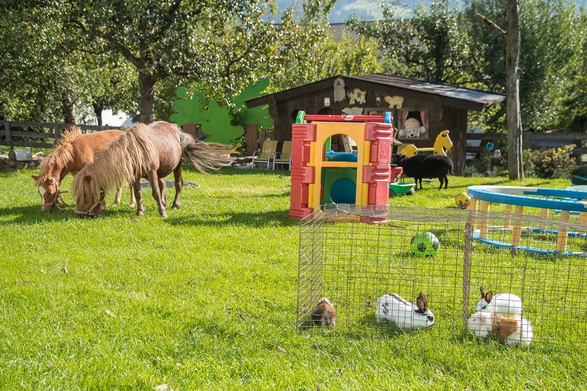 brixnerhof im zillertal: sommer