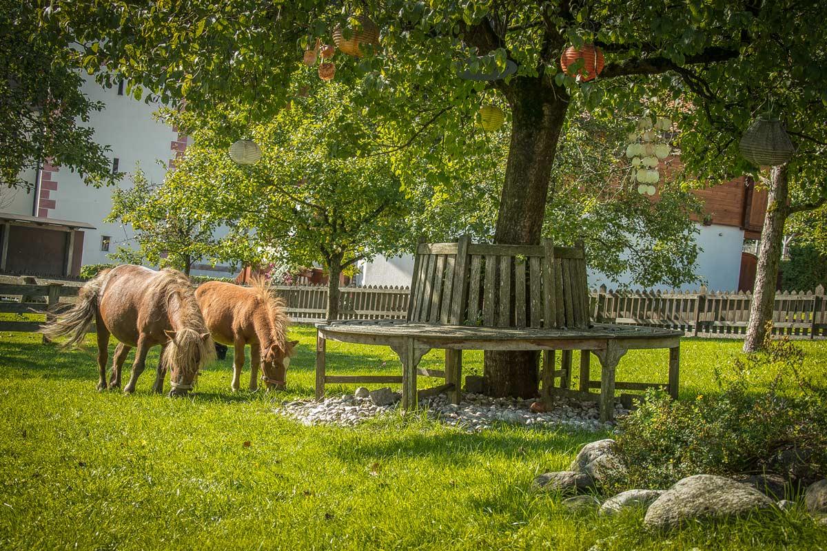 brixnerhof im zillertal: kind&kegel